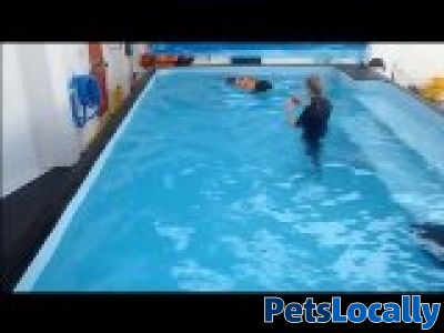 Essex Canine Hydrotherapy In Wickford Essex Petslocally Uk