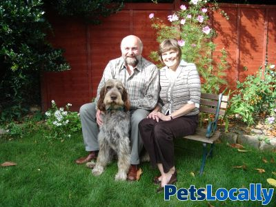 Dog Rescue York Selby