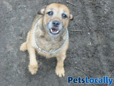 Pets A Bound In Rotherham South Yorkshire Petslocally Uk