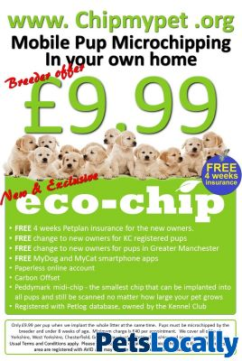 Dog Grooming Parkgate Rotherham