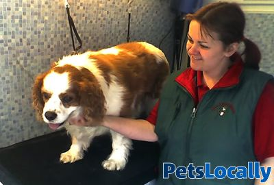 Pets At Home Dunfermline Dog Grooming